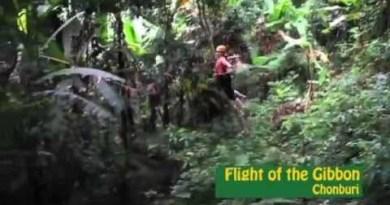 Flight of the Gibbon – Ziplining come Bangkok Thailand