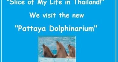 """Gash of my lifestyles in Thailand"" Dophinarium tag 2019"