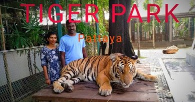 Thailand day out : pattaya coastline | Tiger park pattaya