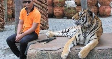 Nong Nooch Village Tour, Pattaya (Thailand)