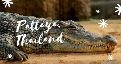 Crocodiles in Pattaya, Thailand | Pinay Nomad