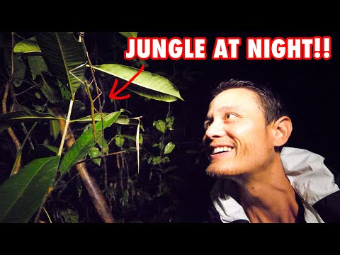 Scary Evening Safari within the Jungle!! 🐍 Khao Sok National Park, Thailand | Our Jungle Camp