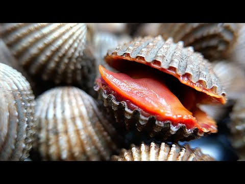 Thai Food – BLOOD CLAMS Aoywaan Bangkok Seafood Thailand