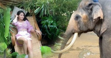 The Wildest Set of living in Pattaya, Thailand: Girls, Monkeys and Elephants However No Tourists!