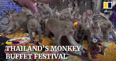 Hundreds of primates bolt for food at annual monkey festival in Thailand