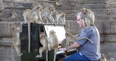 Piano for Wild Macaques in Temple, Lopburi, Thailand