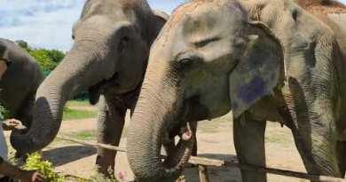 The Elephant Jungle Sanctuary in Pattaya, Thailand