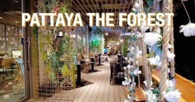 PATTAYA : THE FOREST BY THE SKY RESTAURANT #pattaya #Pattayatoday