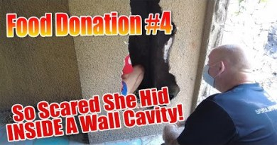 Pattaya City – Buzzin Meals Hand Out Day 4, This girl became once so worried she hid interior a wall cavity!