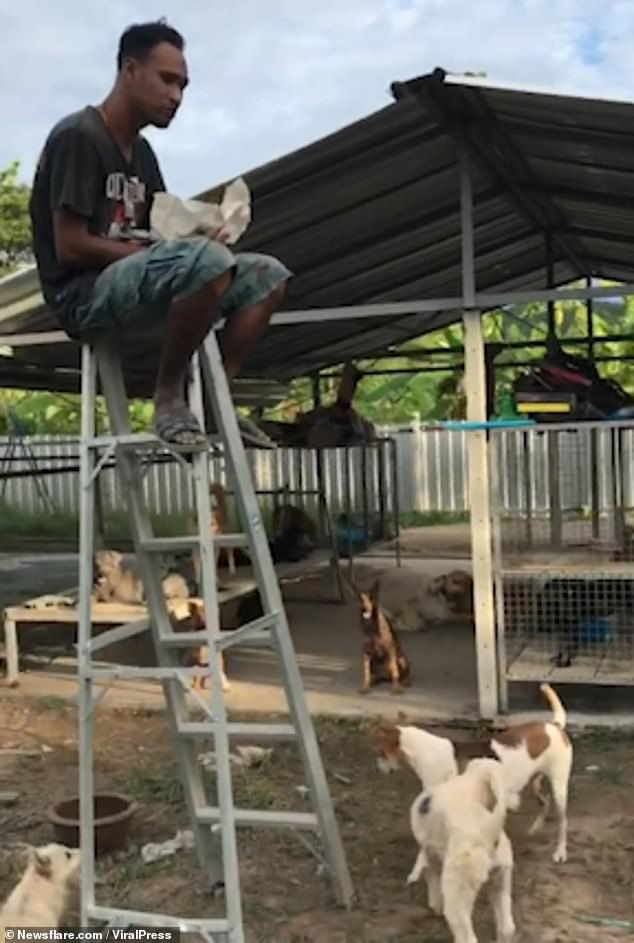 Thai man needs ladder to escape street dogs