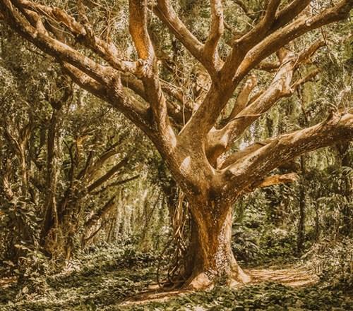 Garden of Eden | Q&A