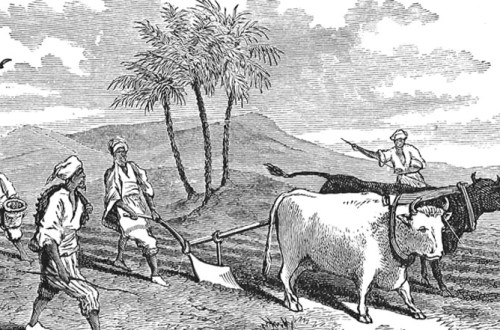 Drawing of oxen with yoke