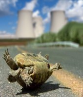 Turtle on its back with cooling towers in the background