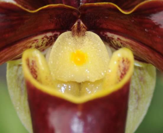 terapeuta-floral