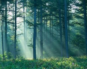 Sunlight breaking thru trees