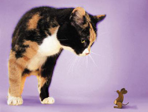 mus o katt