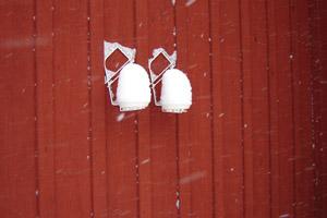 snöblommor