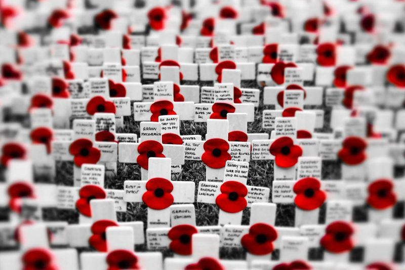 Remembrance Poppies, Belfast
