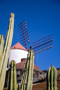 Windmill and Cacti