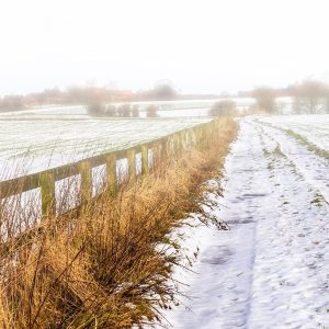 Misty Fields / Snowy Path