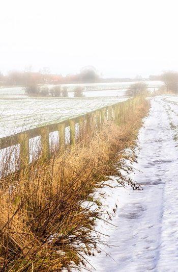 Misty Fields / Snowy Path