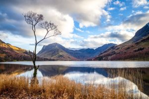 The Lone Tree Buttermere