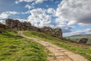 Path to Cow and Calf