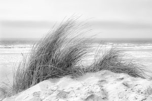Grass in sand dune