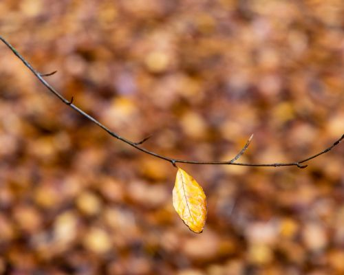 Single leaf