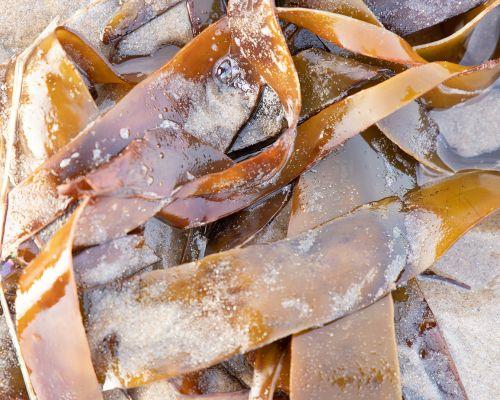 Kelp and sand
