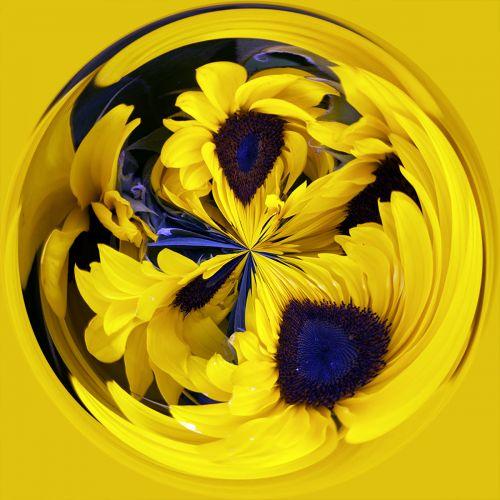 Sunflowers PSC043