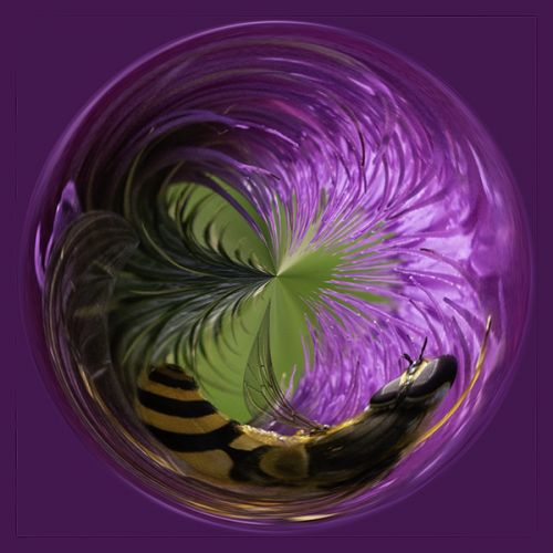 Bee on thistle PSC015