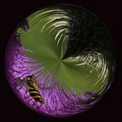 Bee on thistle PSC014