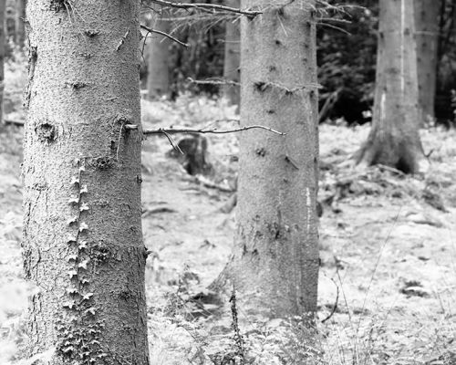 Three Trees mono