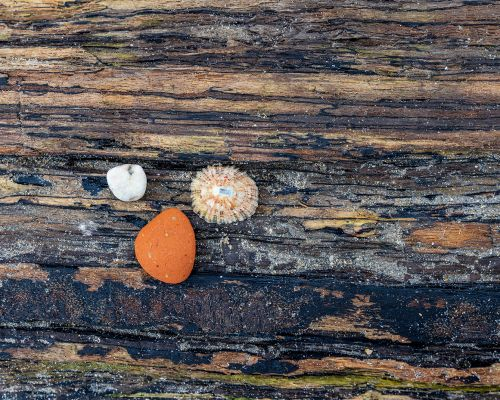Two rocks and a shell