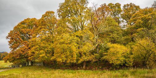 Autumn Trees at Elterwater