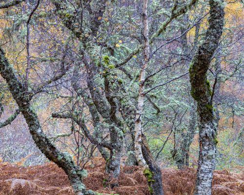 Mish mash of trees