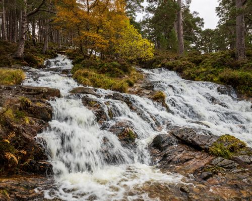 Beech and birch on the waterfall