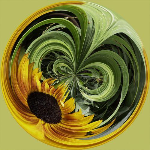 Sunflower PSC044
