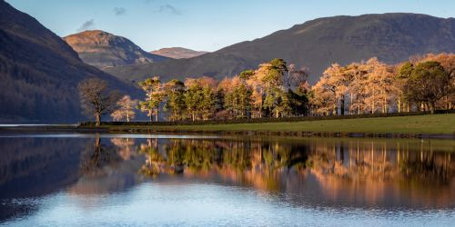 Trees on Buttermere