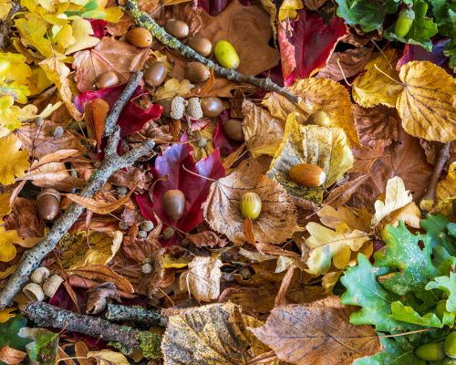 Leaves, twigs and acorns