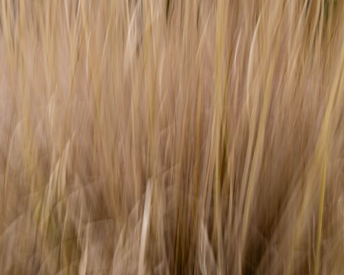 Grasses caught with ICM