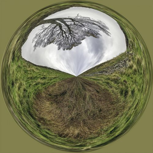 Sycamore Gap PSC042