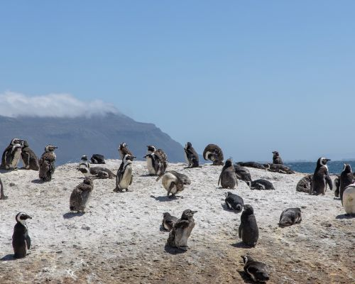 Penguins on the rocks