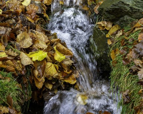 Leaves and stream