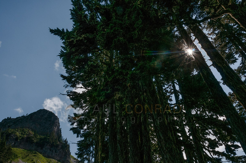 © Paul Conrad/Pablo Conrad Photography - The Sun forms a starburst through a grove of pine with the southern cliff face of Table Mountain on the left. I worked this to try to get the starburst. The aperture was at f/22 on my 17-35.