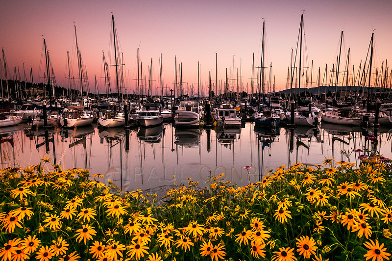 © Paul Conrad/Pablo Conrad Photography - Sunset at Locust Beach and Squalicum Harbor in Bellingham, Wash., on Tuesday evening July 15, 2014.