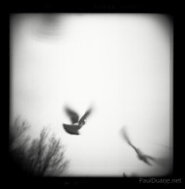 Holga black and white street photography pigeons