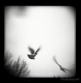 Holga black and white street photography pigeons