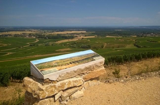 Montagny-les-Buxy : le vignoble du Montagny